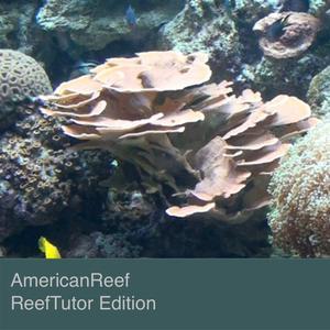 AmericanReef - ReefTutor How to Setup aSaltwater and Coral Reef Aquarium