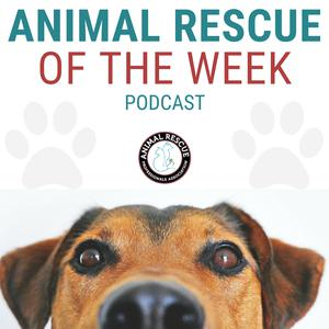 Best Non-Profit Podcasts (2019): Animal Rescue of the week