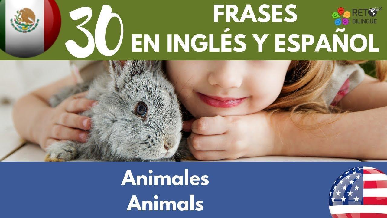 119 Los Animales Frases En Inglés Y Español Cómo Criar