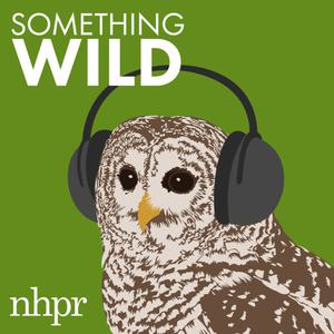Best Government Podcasts (2019): Something Wild